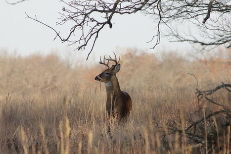 What Is Hunting Liability Insuranc | Health | Scoop.it