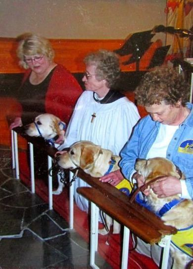 St Francis Day & Blessing of the Animals – 2015 | Spiritual transformation | Scoop.it