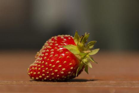 Éstos son algunos de los clones de alimentos que consumes cada día | Educacion, ecologia y TIC | Scoop.it