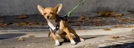 Sometimes You Need to Deal with the WHY in Dog Training and ... | Dog Therapy Training | Scoop.it