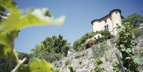 Hors-d'œuvres : Château Grillet, la première gorgée d'abricot - Le Monde | oenologie en pays viennois | Scoop.it