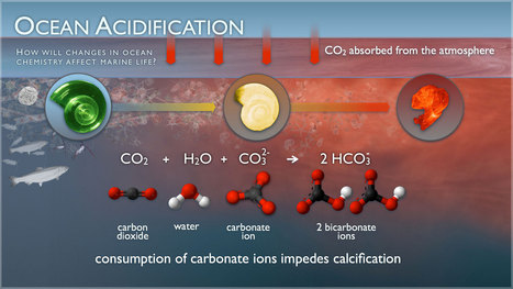 """Ocean acidification up 26% since pre-industrial era - The Australian (""""very difficult to reverse"""")   Water Stewardship   Scoop.it"""
