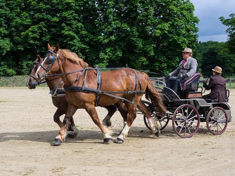 balade photo en Finistère, Bretagne et...: cheval breton - attelages à Carhaix, en couleurs (14 photos) | photo en Bretagne - Finistère | Scoop.it