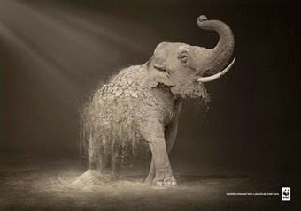 Stunning Print Advertising for the World Wildlife Fund by Contrapunto BBDO. | Future Of Advertising | Scoop.it