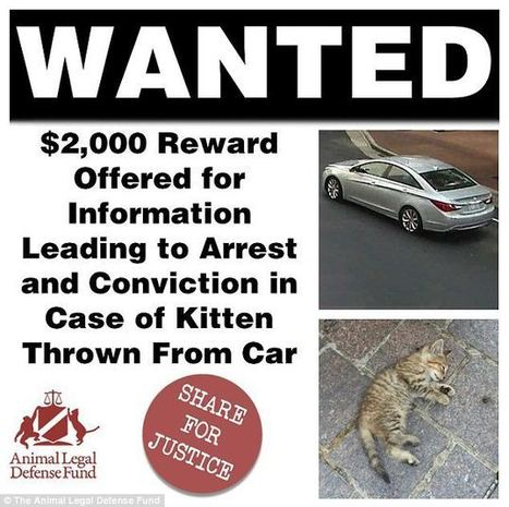 Motorist throws kitten out window at animal rights protestors | Nature Animals humankind | Scoop.it