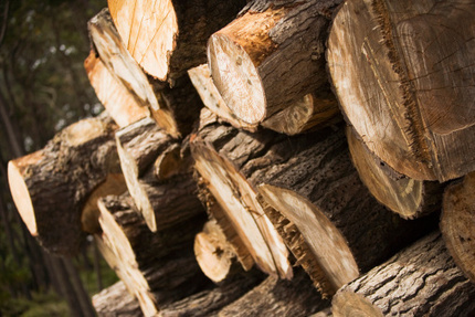 Timber ETFs: Rebuilding After Hurricane Sandy | Timberland Investment | Scoop.it