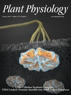 Constitutive & Cell-Specific Overexpression of AVP1, Enhances Biomass Accumulation, Phloem Loading, and Long-Distance Transport | Plant Gene Seeker -PGS | Scoop.it