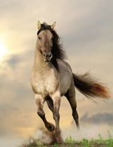 » The Mythology of Equine Archetypes   - Equine Therapy   Equine Assisted Learning and Psychotherapy   Scoop.it