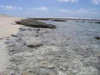 Le corail est-il la meilleure barrière contre la montée des eaux ? | Requins | Scoop.it