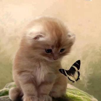 Twitter / fabulousanimals: A kitten and a butterfly ... | Cat Times | Scoop.it
