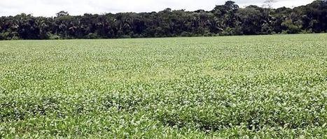 Le réchauffement climatique risque d'empêcher les forêts tropicales de stocker le carbone | Planete DDurable | Scoop.it