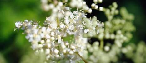 5 plantes contre l'arthrose et les douleurs rhumatismales - Le Point | 321654 | Scoop.it