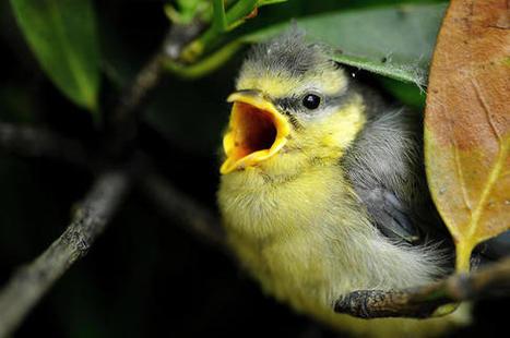 Los árboles envían señales de auxilio a las aves cuando los insectos les atacan | CURIOSIDADES | Scoop.it