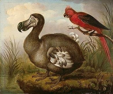Des milliers de dodos ont disparu à cause d'un cocktail d'excréments il y a 4000 ans   Zoologie et Ethologie   Scoop.it