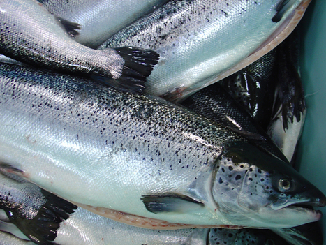 Seafood Roundup Newsletter | Aquaculture | Scoop.it