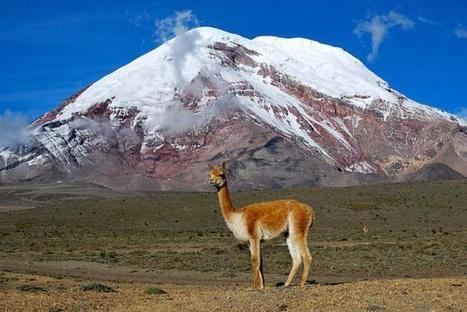 Ecuador: The Other Latin American Success Story | Ecuador | Scoop.it