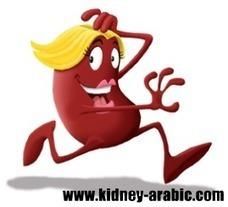 علاج الأمراض الكلية - توسيع الكلي : أسباب ، أعراض و العلاج   أمراض الكلية في السعودية   Scoop.it