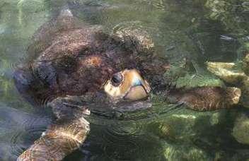 Beachgoers beware: Sea turtle nesting season is underway | All about water, the oceans, environmental issues | Scoop.it