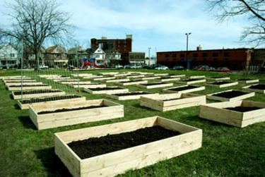 Curious about urban farming? - Buffalo Rising | Urbanism 3.0 | Scoop.it