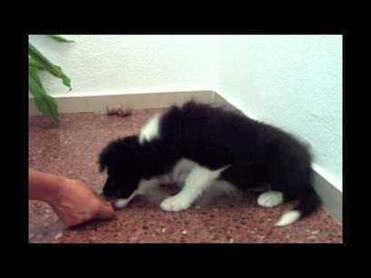 Trabajo con cachorros. - YouTube   naturaleza   Scoop.it