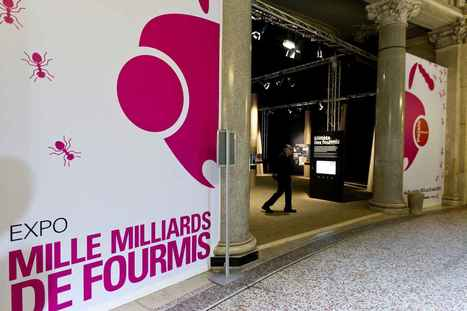 Exposition: Mille milliards de fourmis au Palais de la découverte | Les Fourmis de Bernard Werber | Scoop.it