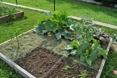 Caen Des étudiants de Caen veulent créer un jardin partagé, sur le campus | (Culture)s (Urbaine)s | Scoop.it