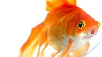 How a fish's brain is like yours | The brain and illusions | Scoop.it