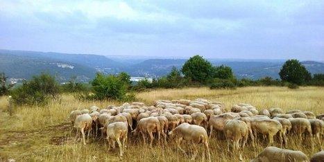 Une balade pastorale | Agriculture en Dordogne | Scoop.it