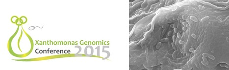 5th Xanthomonas Genomics Conference 2015 - July 8 - 11, 2015. Bogotá, Colombia | Effectors and Plant Immunity | Scoop.it