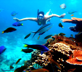Make Your Great Lifetime Experiences in Underwater World at the Peninsular Malaysia. | Make a Trip & Travel to the beach. | Scoop.it