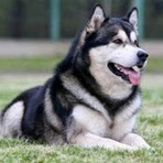 The Most Popular Top 10 Lists | myten.in: Top 10 Most Dangerous Dog Breeds in the world | top10 | Scoop.it