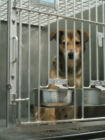 Dogs in Laboratories | research project | Scoop.it