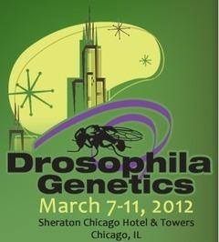 Drosophila: un alleato nella ricerca scientifica | Med News | Scoop.it