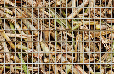 Breaking: Government to withdraw subsidies for unsustainable biomass | Biomasse | Scoop.it