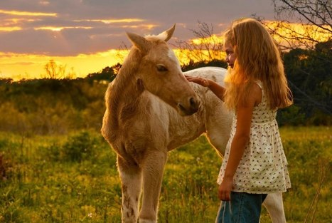 A Message to Horse Lovers ~ From a Kill Buyer   Redemption for Animals   Scoop.it