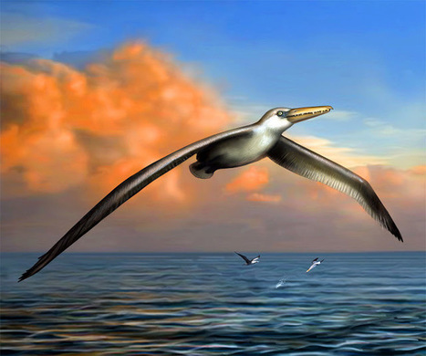 Giant prehistoric bird fossils found in Antarctica | Histoire et Archéologie | Scoop.it