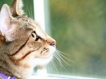 6 Reasons You Might Let Your Cat Out, And Why Not To - Petfinder | Cats' behavior and maintenance. | Scoop.it