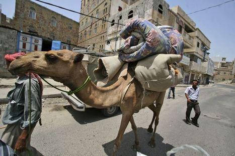 Deadly Virus Surges Through Gulf States | Virology News | Scoop.it