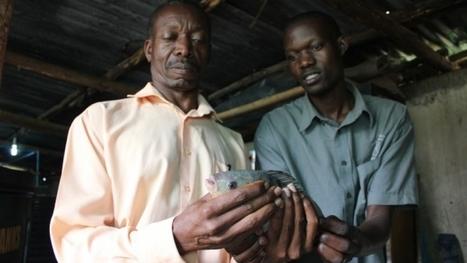 Aquaponic lunch: Pushing super-efficient fish & veggie farming in Uganda - Public Radio International | Technological Decentral Abundance (TDA) | Scoop.it