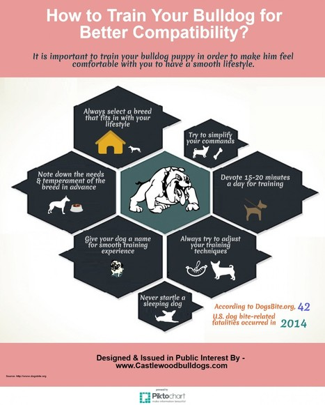 How to Train Your Bulldog For Better Compatibility | Visual.ly | Castlewood Bulldogs | Scoop.it