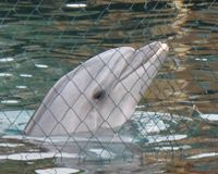 Free the Captive Dolphins in Turkey - The Petition Site | Earth Island Institute Philippines | Scoop.it