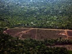 Desmatamento da Amazônia sobe 26% nos últimos 7 meses, diz Inpe | Blog de Biologia Escola da Vila - Rafael Furlani | Scoop.it