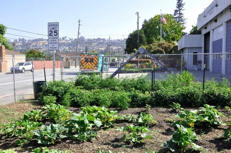 From Blight to Bounty: Revitalizing Communities through Urban Farming | Growing Food | Scoop.it
