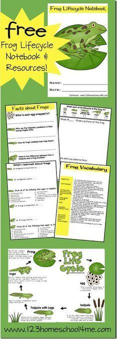 printables (free)   Media Resources for a Kindergarten Lesson plan on the lifecycle of a frog.   Scoop.it