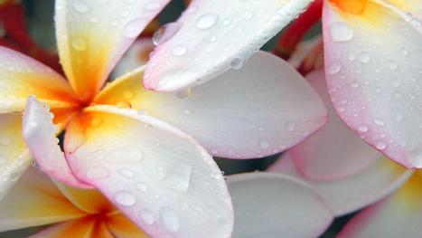 Mangnificent Dewy Flowers Download Hd Pictures « Pin HD Wallpapers | Flowers Wallpapers | Scoop.it