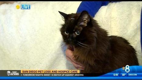 San Diego pet loss and hospice care - KFMB News 8   Pet Bereavement   Scoop.it