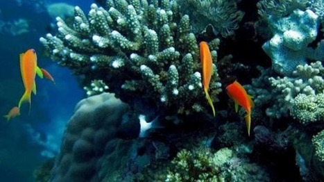 Ocean acidification may be worst in 300 million years: | CLIMATE CHANGE WILL IMPACT US ALL | Scoop.it
