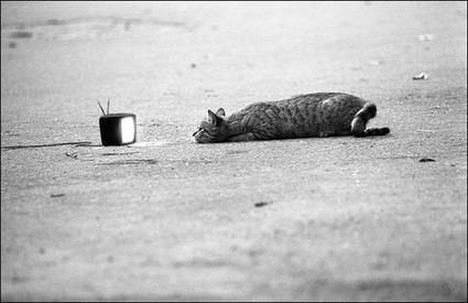 tv cat | VIM | Scoop.it