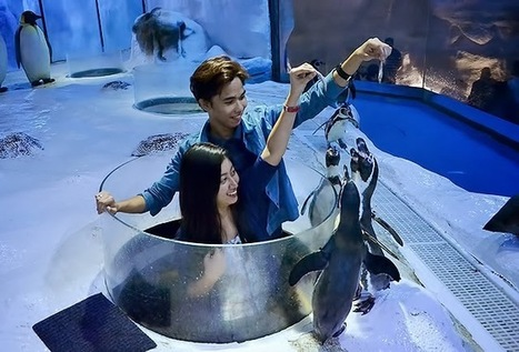 Manila Ocean Park: Your All Season Holiday Destination ~ Geejay Travel Log | Pinoy Travel Bloggers Journal | Scoop.it
