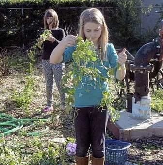Zamora Elementary garden in full bloom in Woodland, CA | School Gardening Resources | Scoop.it